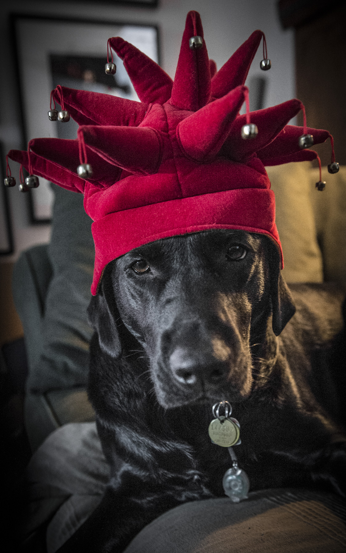 Merry Christmas from Bob the Dog and his faithful servant!